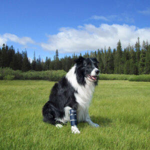 Balto-Dog-Ulna-Radius-Brace-BT-BONE-1