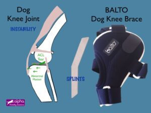 treatment dog ACL knee cruciate ligament