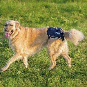 Balto-BT-LIFE-Dog-Brace-1-1