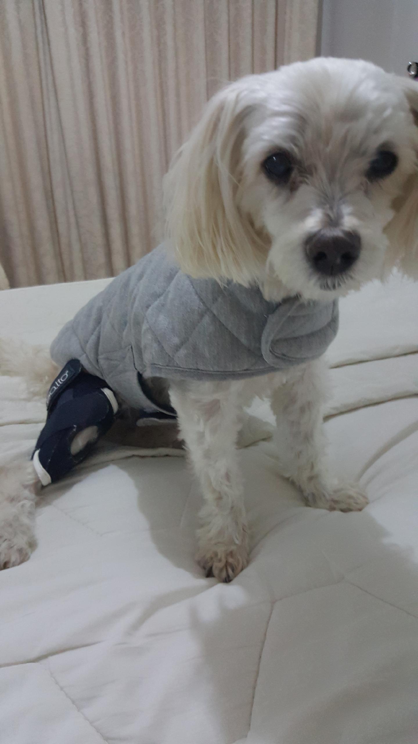 Small breed dog cruciate brace BALTO